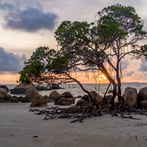 A scenic photo of the sunset through the branches of a tree on a beach.