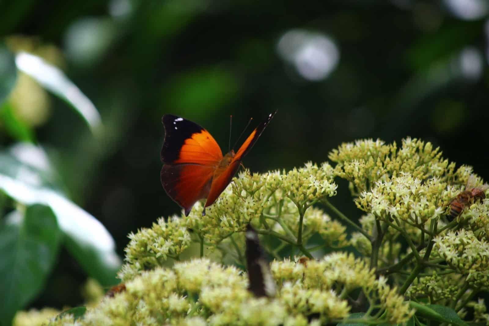 A Biodiversity Hot Spot
